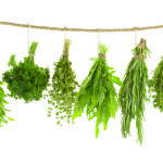 Set of Spice Herbs - Hanging and Drying, isolated